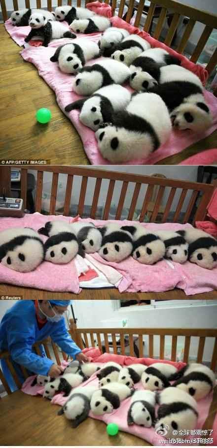 这货不是熊猫!这货不是熊猫!