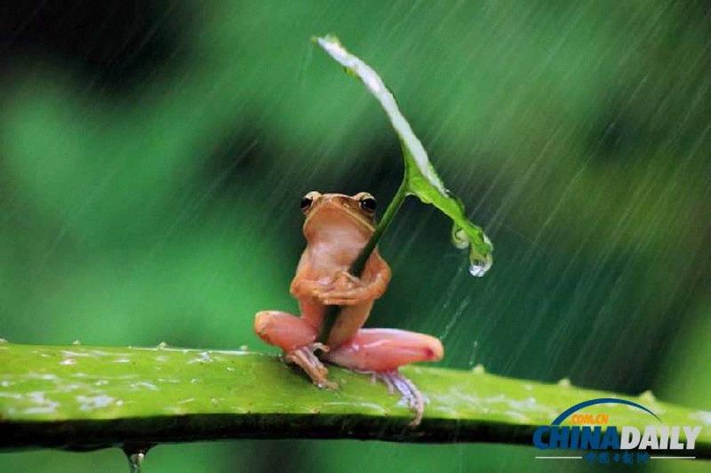 天天落雨,不让人活了。。