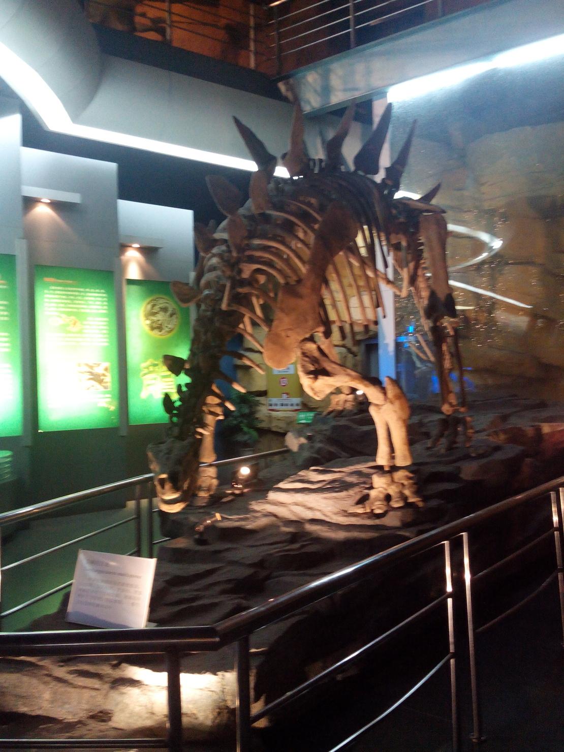 我看见了真正的恐龙化石