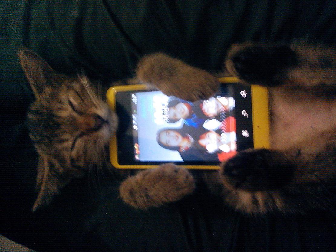 我家猫咪为我代言手机呢!