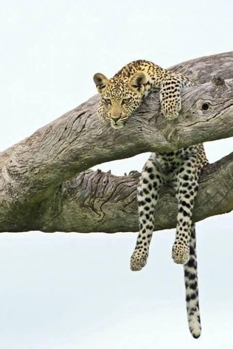 美腿都爱穿豹纹!哈哈哈