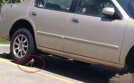 女司机不知道有手刹这个东西