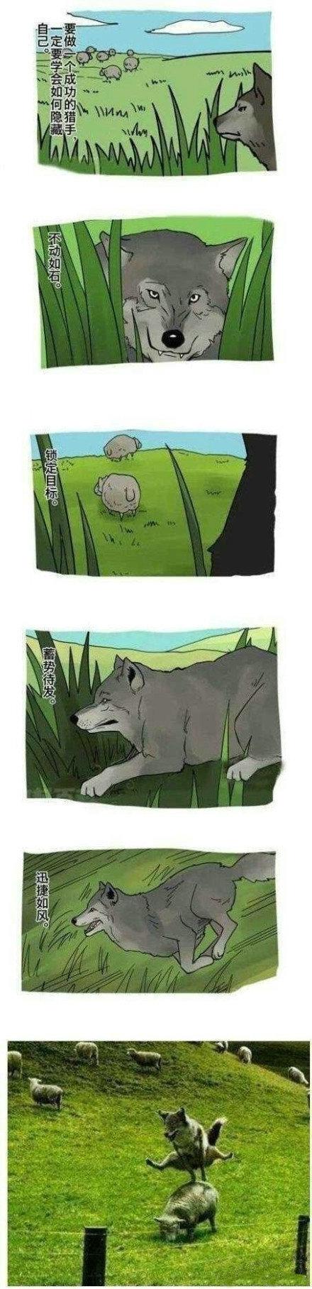 一个成功的猎手,太蠢萌了,看一次笑一次!!