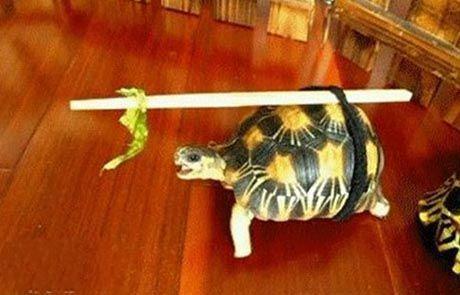自制的遛龟神器,小家伙自己溜半小时了