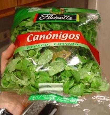 这蔬菜肯定是新鲜的!青蛙大哥对不住...打扰你生长发育了..