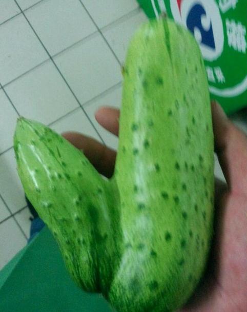 身为黄瓜,你有必要这么邪恶么
