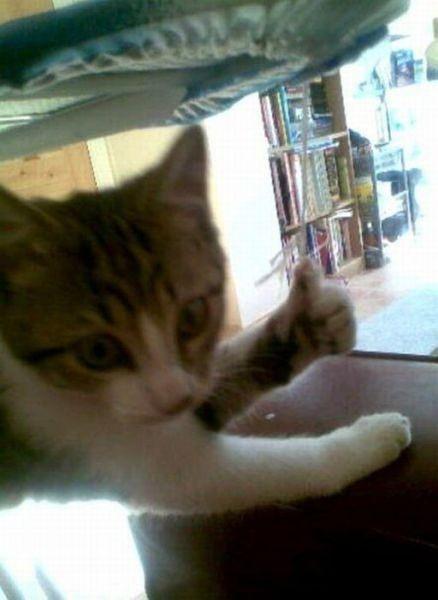 一只会点赞的猫