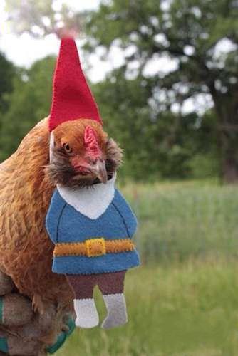 人才啊,把鸡搞成这样!