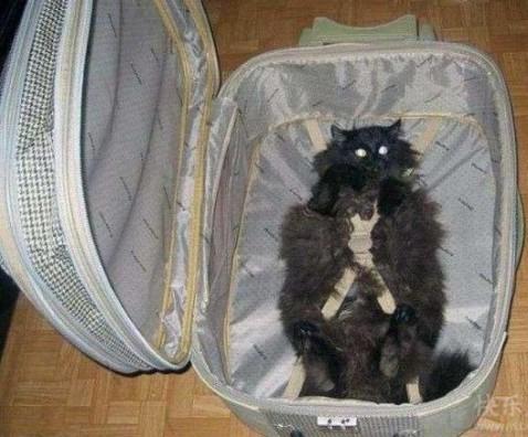 跟主人一起去旅行~~喵