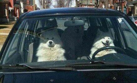 司机很开心,乘客很紧张