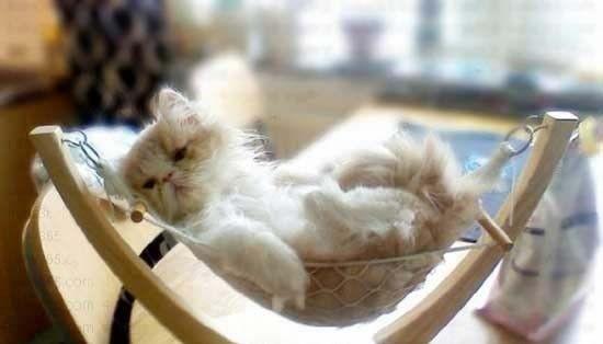 休个病假,在家躺一天