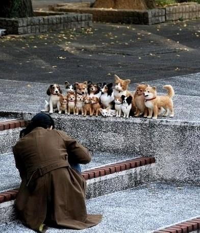 狗狗全家福。不对!有喵星人!
