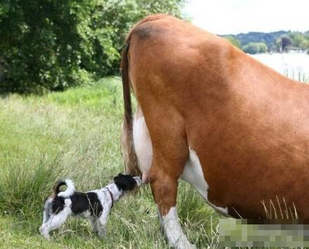 偷菜已过时,现在是偷奶