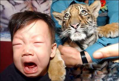 老虎还是很吓人的