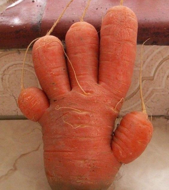 胡萝卜君开始进攻地球了