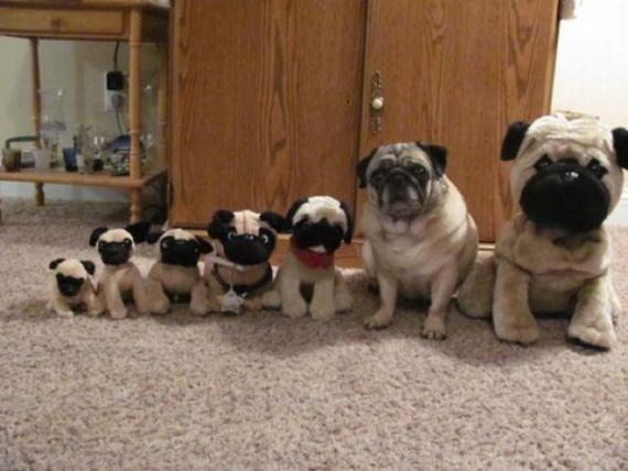 全家福,狗狗似乎不是很高兴