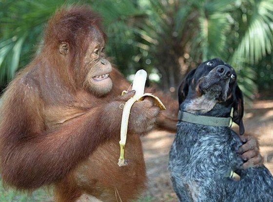 拜托,我真的不吃香蕉