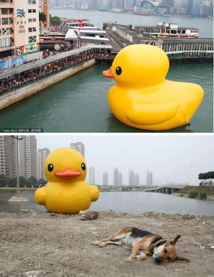 """同样是鸭子,身份地位明显有区别:一个是香港的小黄鸭""""万人敬仰"""",一个是天津的小黄鸭""""狗不理"""""""