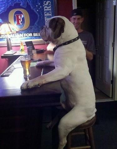 老板来杯啤酒,不加冰谢谢