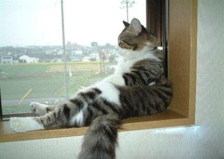 遥想年少时,我也是一只拉风的猫