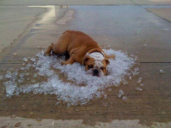 实在是太热了