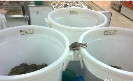 一只螃蟹从20元一斤爬到了30元一斤里面,太有追求了