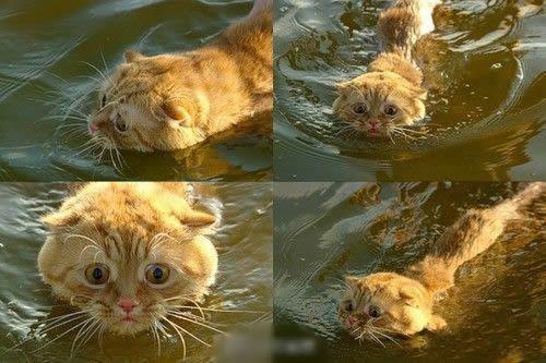 其实喵也会游泳啦