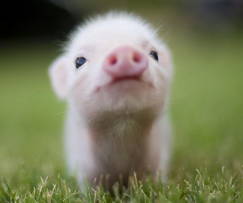 本来应该是这样的: 我:你知道最喜欢问为什么的动物是什么吗? TA:什么? 我:猪 TA:为什么? 可是却成了这样: 我:你知道最喜欢问为什么的动物是什么吗? TA:猪 我:为什么?