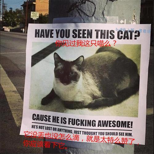 一则灰常贱的寻猫启事,你们感受下。