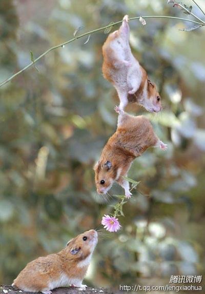 爱情与友情的区别  爱情可能会像花儿一样凋谢  但友情永远不会放手