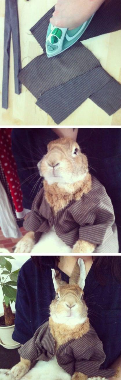 娶个手巧的媳妇,兔子也跟着沾光