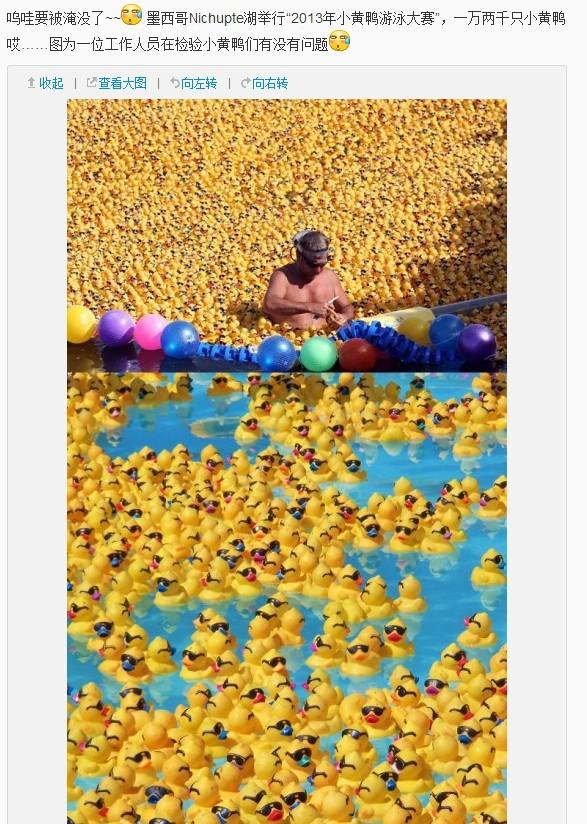 一只大黄鸭倒下了,千千万万个小黄鸭站了起来!