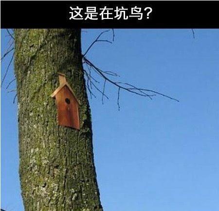 你这是坑鸟吗?。。。。。