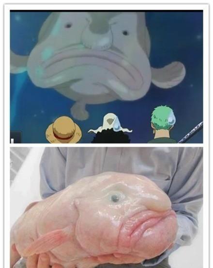 艹,原来真的有这种鱼……