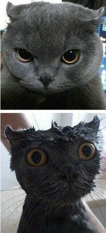 我真的很讨厌洗澡