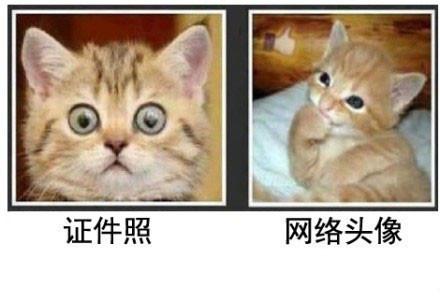 证件照和QQ头像