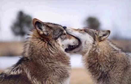 第一次接吻太激动了