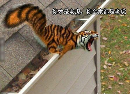 非常罕见的松鼠,最近老虎总是被黑。。。黑。。。黑!!!