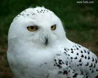 主持人问:猫是否会爬树?老鹰抢答:会!主持人:举例说明!老鹰含泪:那年,我睡熟了,猫爬上了树…后来就有了猫头鹰…