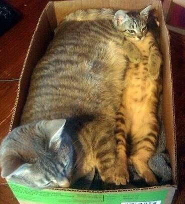 室友越来越胖啦,鸭梨好大。。敢怒不敢言啊~~