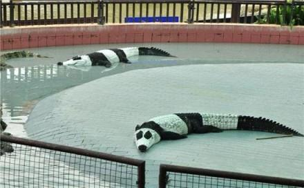 这是哪个国家的动物园啊?那么缺熊猫,赶紧送一两只吧!太悲催了……
