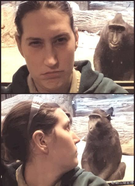 这是动物园里非常有趣的一幕。一个人正在自拍时被身后的猴子抢了镜,没想到转过头去看猴子时,它却在装无辜。