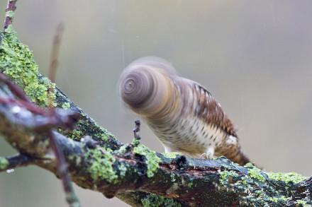 这只鸟。。。是在甩头。。。整理发型