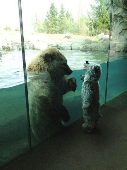 当动物园里的真熊遇见穿熊外套的孩纸! 你说他们俩各自在想神马呢?