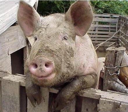 """到底谁特么的蓝牙名叫""""一只老母猪""""!!!每次我开蓝牙,系统就提示""""一只老母猪要和你配对""""23333笑尿了。。。"""
