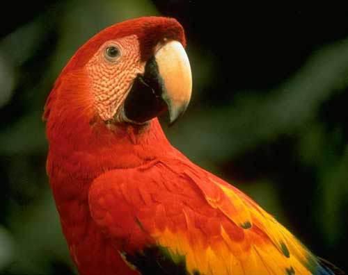 """任务清单:1.买一只鹦鹉。2.教它讲""""救救我,我被变成鹦鹉了""""3.把它留在公共场所。(追蜗牛未遂)"""