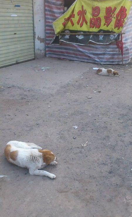 俩门神!以前石狮子,如今换成狗