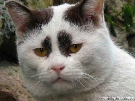 周立波家养的猫。。。