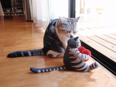 你都对着窗外一下午了,陪我玩一会嘛。。。