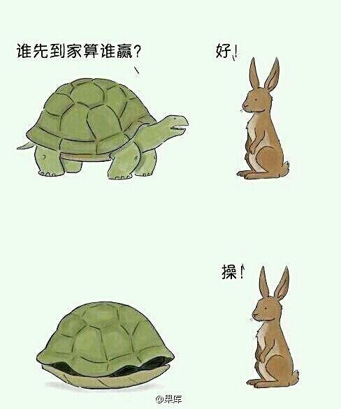 史上最聪明的乌龟看得我内牛满面的